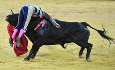 Pictured: The bloody moment a matador is gored by a bull