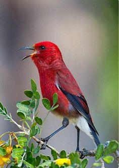 สนใจดูนกสวยๆในประเทศไทยและต่างประเทศ..กดเข้าไปชมนกต่างๆ ข้างล่างนี้ได้เลยครับ..👇..⤵ #ไก่ฟ้า #นกพิราบและนกเขา  #นกแก้ว #นกแก้วและนกหก  #นกกระเต็น #นกเงื... - อันนอร์ Freebird7 - Google+