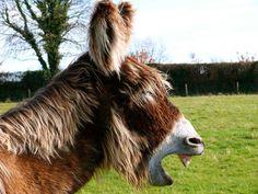 Happy Donkey Monday!