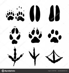 Set of Mammals and bids Footprints - Vector Illustration - Royalty-free Footprint stock vector Animal Body Parts, Free Vector Art, Photo Illustration, Image Now, Mammals, Footprints, Royalty, Wildlife, Drawings