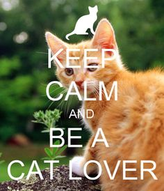 Be A Cat Lover