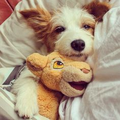 Jack Russell and his Cuddly Toy