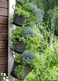 Container Gardening, Herbs, Allotment, Plants, Cottage, Interior, Indoor, Cottages, Herb