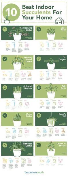 Best Indoor Succulents For Your Home