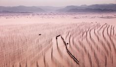Picturesque mudflats in Xiapu, Fujian Province