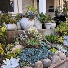 Porch goals by @addytude #succulent #succulove #succulents #succulentsofinstagram #thesucculentsource