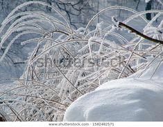 Park Winter Landscape Frozen White Close Stock Photo (Edit Now) 1582482571 Winter Landscape, Photo Editing, Royalty Free Stock Photos, Frozen, Park, Illustration, Photography, Editing Photos, Photograph