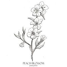 Peach Blossom Print, Flower Art, Botanical Illustration, Wall Art, Blossom Flora… – Welcome to Tattoo World Peach Flowers, Peach Blossoms, Peach Blossom Flower, Flower Prints, Flower Art, Peach Tattoo, Dad Tattoos, Blossom Tattoo, Flower Sketches
