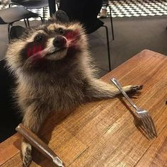 Cute Little Animals, Cute Funny Animals, Funny Cute, Pet Raccoon, Images Gif, Cute Rats, Tier Fotos, Oui Oui, Freundlich