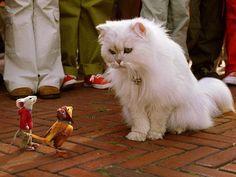 #ELLEcinema 厳しい寒さで家に引きこもりがちなこのシーズン心あたたまるストーリーもふもふ動物にほっこり癒されたいネコやイヌなどキュートな動物たちが登場するヒット映画をプレイバック大人気シリーズスチュアートリトル2に登場する動物たちは本物のように見えて実はすべてコンピューターアニメーションなんだそう #StuartLittle2 #StuartLittle #movie #cinema #elleonline #ellejapan #elle #cat  via ELLE JAPAN MAGAZINE OFFICIAL INSTAGRAM - Fashion Campaigns  Haute Couture  Advertising  Editorial Photography  Magazine Cover Designs  Supermodels  Runway Models