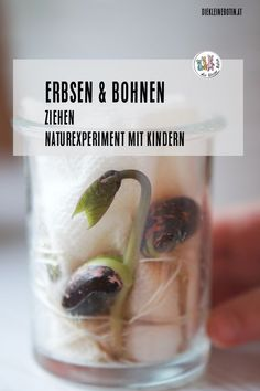 Erbsen und Bohnen Watching seedlings is great: Peas and beans grow quickly and easily in the glass. The nature experiment is great for kids from about 3 years! The post Peas and beans appeared first on Leanna Toothaker. kindergarten Peas and beans Projects For Kids, Diy For Kids, Crafts For Kids, Minerals And Gemstones, Milky Way, Embossing Folder, Science And Nature, Science Experiments, Teaching