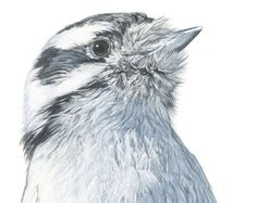"""""""Winter Finch"""" is my original watercolor painting that measures approximately 5 x 7 inches (Paper is approx. 8 x 10 inches and the bird itself measures approx. 2 1/2 x 4 inches.) It is painted on acid free, 100% cotton, 300 lb. soft press Fabriano Artistico extra white watercolor paper with Winsor & Newton watercolors and is signed by me the artist. Reference photo courtesy of Vincent Van Zalinge on unsplash.com. This painting is NOT matted or framed. Note: There may be staple holes,..."""