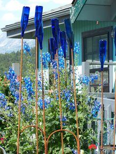 Blue bottle garden in Skagway, Alaska, photo by Christi