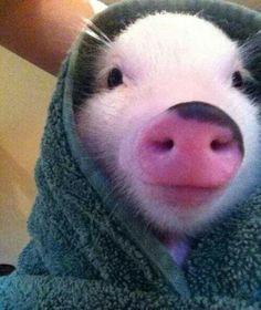Pig ina blanket ;}