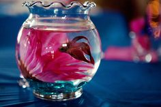 Wedding centerpieces (for guests to take home)! Beta fish and marbles that are your wedding colors. Guests love this! Photo by Elizabeth--- disgusting, betta fish are living creatures and not decorations. I hate to be agressive but this is just cruel.