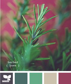 herbed hues