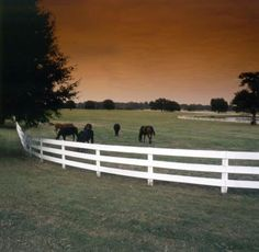 Horses grazing at Ocala Horse Farms.  This is a beautiful place to live.  I miss my horse days.