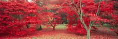 Trees in Fall, Gloucestershire, UK Photographic Print by Peter Adams