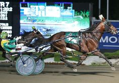 Captaintreacherous stretched from Pacing Derby