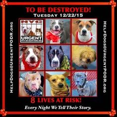 *****ALL THESE DOGS R TO BE KILLED 1/22/15! THEY ONLY HAVE TIL 12noon EST 2 BE SAVED FAST RIGHT NOW!! CLICK on: (visit site) 2 VIEW ALL DOGS,  READ EACH PROFILE N CHECK OUT ALL THEIR PICS/ VIDEOS!! PLZ HURRY TIME IS QUICKLY RUNNING OUT 2 SAVE ALL THESE BEAUTIES LIVES!!! PLZ CHOOSE LIFE,  NOT DEATH!!! MERCY N COMPASSION 4 ALL THESE PRECIOUS SOULS!!! nycdogs.urgentpodr.org