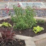 hexagonal oak sleeper raised beds make a feature in this front garden  #plewsgd