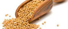 Chá de semente de mostarda - Benefícios e propriedades