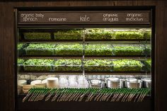 Sweetgreen, A Stylish New Farm-to-Table Salad Shop - Eater Inside - Eater NY Cafe Design, Store Design, Restaurant Design, Restaurant Bar, Nyc, Salad Shop, Fuerza Natural, Greens Restaurant, Supermarket Design