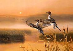 Круги на воде… Блики на водной глади… а утки летят.  (неизвестный автор)