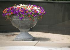 Container Gardening | Gardening Tips | Garden Guides