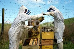 Commercial Beekeepers with Beehives royalty-free stock photo Interracial Marriage, Stock Imagery, Kiwiana, Save The Bees, Alternative Health, Bee Keeping, The Life, Image Now, Royalty Free Stock Photos
