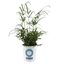 De kamerplant beleeft een comeback, en de Ogreen Clean Machines-planten zorgen bovendien voor schone lucht in huis. Ze zijn afkomstig van  Nederlandse kwekers en worden verzonden in een milieuvriendelijke verpakking vanuit webshop  ogreen.eu. € 9,50