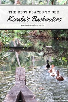 India - A guide to the backwaters of Kerala, India and where is the best place to visit them including information on Munroe's Island, Allepey and Cochin.