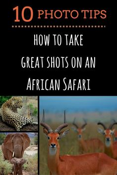 10 Photo Tips. How to take great shots on an African Safari.