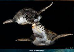 love under the sea #turtle #turtles #tortoise
