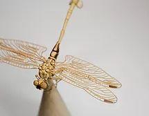 Golden flangetail (Sinictinogomphus clavatus)