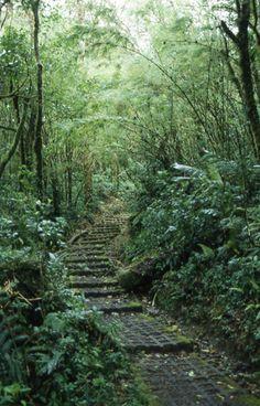 beautiful rainforest monteverde, costa rica