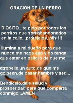 Pin by Jorge Rijo on Mascotas I Love Dogs, Puppy Love, Cute Dogs, Animals And Pets, Funny Animals, Cute Animals, Stop Animal Cruelty, Chihuahua Love, Little Pets