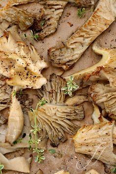 pleurotus-come-cucinarli/