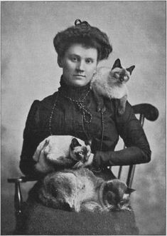 "Mrs. Robert Locke founded the Beresford Cat Club in 1899 and was its first president. Mrs. Locke owned the first registered Siamese cats in America named ""Calif,"" ""Siam,"" and ""Bangkok."""