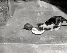 This turtle named Shelly and this cat named Jezebel, 1922 | 20 Lovely Cat Photos From The '20s