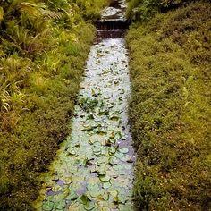 "@limangelica's photo: ""Domingo agradável!!! #photo #photograph #brasil #sp #natureza #jardim #jardimbotanicosp #foto #fotografia #vida #vitoriaregia"""
