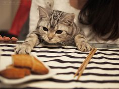 """Screw chopsticks, I possess neither the opposable thumbs nor the patience. OM NOM.""  (op: 俺も喰いたい、、、)"