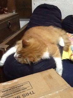 Gato desparramado