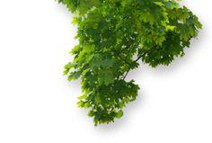 elitete: hojas , montajes  png