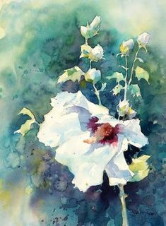 Flower Drawing Julie Gilbert Pollard - how to paint a white flower in watercolor. Watercolor Pictures, Watercolor Cards, Watercolor Print, Watercolor Flowers, Watercolor Paintings, Watercolours, Art Aquarelle, Plant Drawing, Arte Popular
