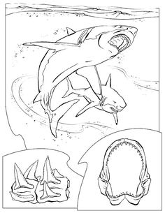 30 Best Shark Week Coloring Images On Pinterest