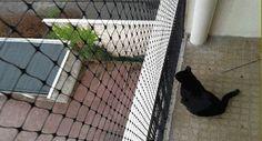 BALCONS SÉCURISES DANS LES IMMEUBLES pour les chats fugueurs Filet de sécurité pour balcon transparent - Accessoires de sécurité pour chat -