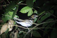 Costa Rica - Exploring the Night in Monteverde