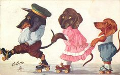 three dressed dachshunds, father, mother, boy, all roller-skating left holding on in a line