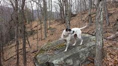 Grand Cherokee Trailhawk, Animals, Animales, Animaux, Animal, Animais
